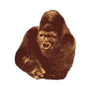 DANESE Qundici Gorilla serigrafia