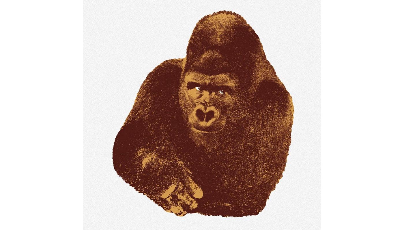DANESE Qundici Gorilla serigrafia gallery